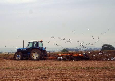 morguefile-tractor-web