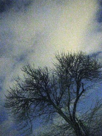 NIGHT-BRANCHES-1-MORGUEFILE-WEB