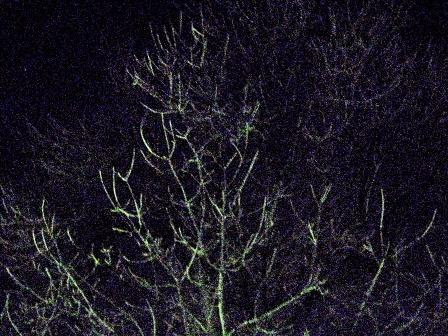 NIGHT-BRANCHES-2-MORGUEFILE-WEB