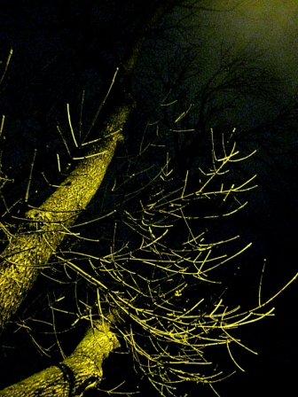 NIGHT-BRANCHES-3-MORGUEFILE-WEB