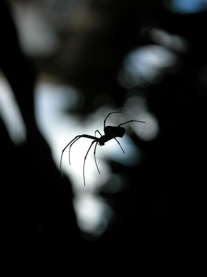 Spider_silhouette