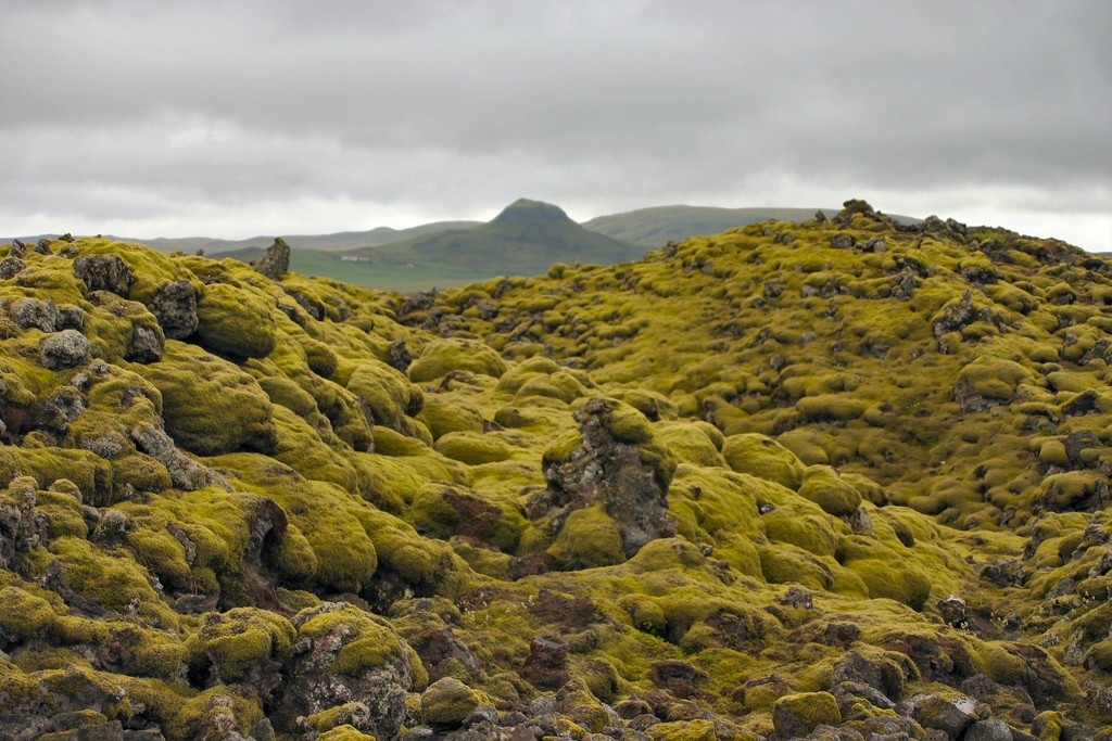 Moss-covered-lava_field_iceland-by_Mal_B. Non-comm_licence