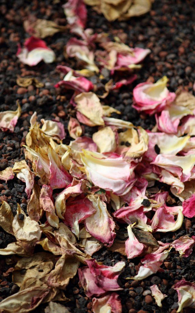 Fallen_rose_petals_Morguefile