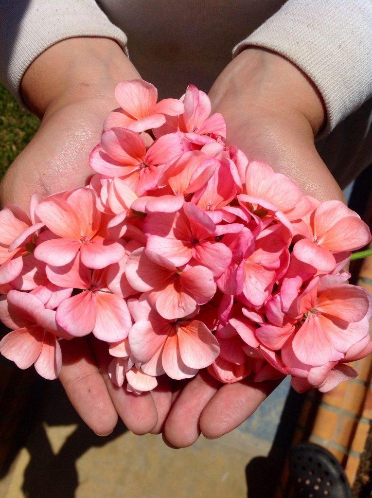 flower-hands_Morguefile