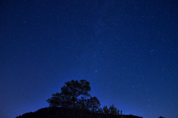 staryy night sky with tree