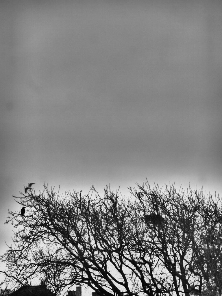 Bare branches against a grey sky. Rooftops and a scrffy nest. One crow sitting on a twig, a seagull flies past.