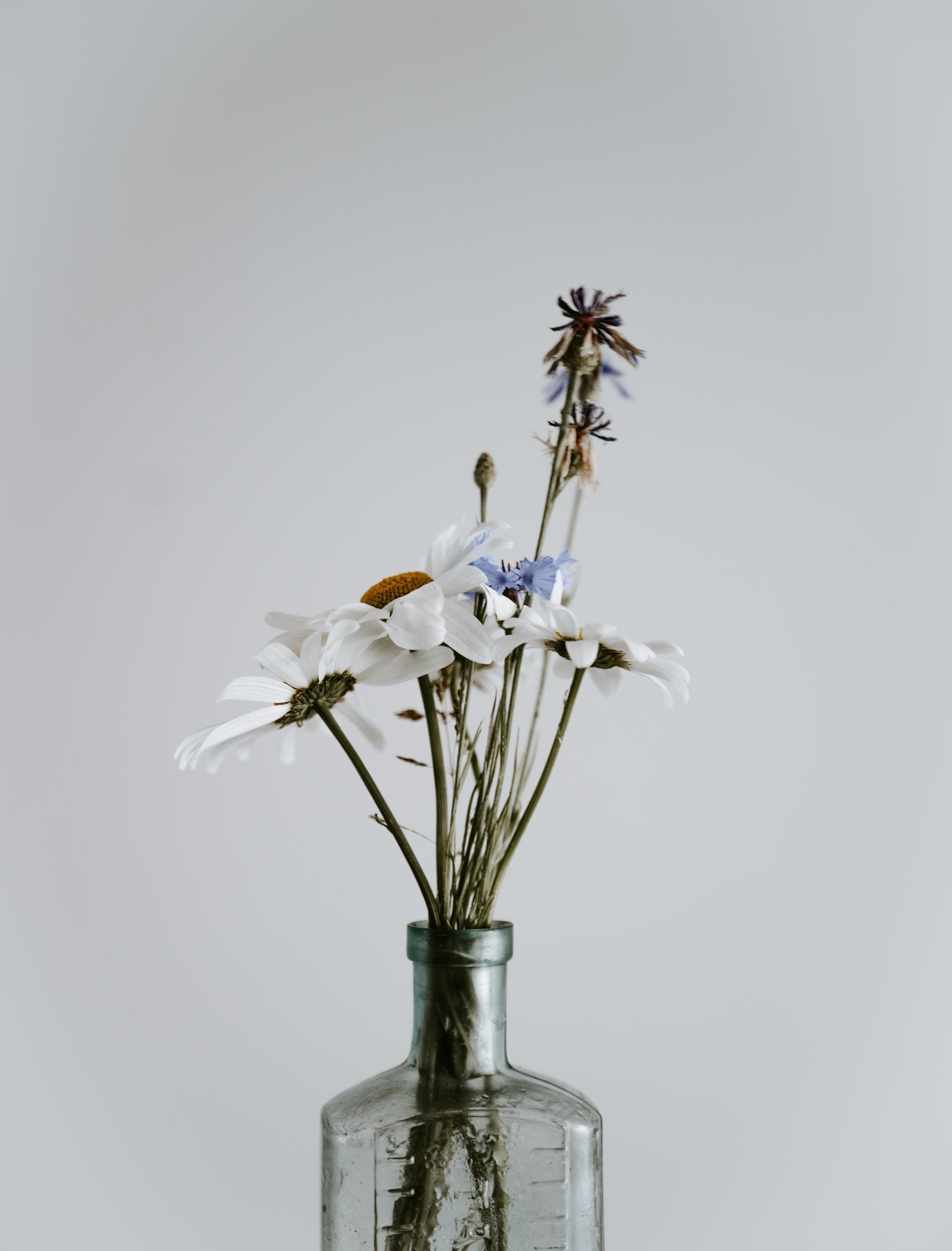 wildflowers in a bottle